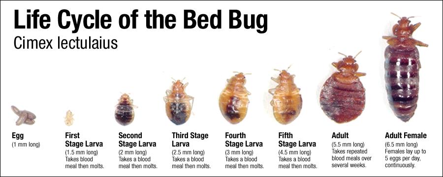 alaska bed bug solutions